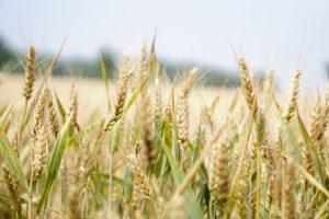 Principal of crop nutrient management